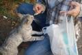 Pisica de Focsani, pe strada