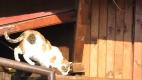 O pisica din Bulgaria...